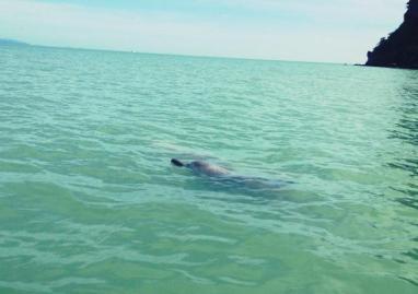 Dolphins Khanom3